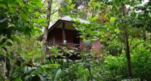 khaosok accommodation