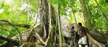 Escapade en Pleine Jungle