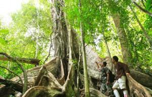 rainforest gateway